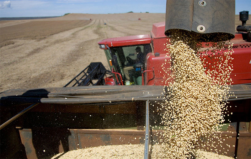 Soybeans and trade wars