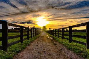 Farm bill negotiations