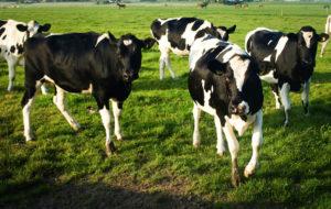Farm income stabilizes short-term
