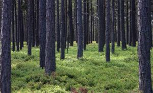 forest, trump, wildfire