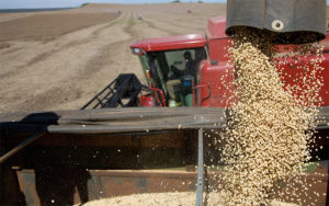 Soybeans Affected by Trade War