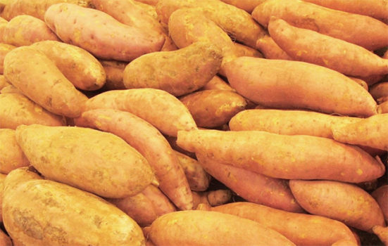 Sweet potatoes impacted by Florence