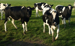 Milk Price Forecast 2019